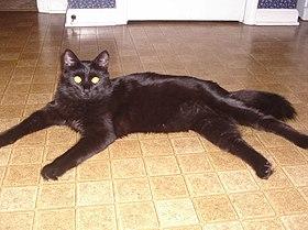 Adult Kittie (s).jpg
