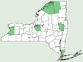 Agalinis tenuifolia var parviflora NY-dist-map.png