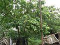 Ain (Marathi- अयन or आईन or ऐन) (817738126).jpg