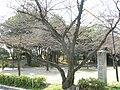 Ajiyoshi Kasugayama kofun01.jpg
