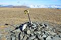 Albeck Seebachern Grosser Speikkofel Gipfel 25102013 521.jpg