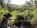Allt an Torr Ruaidh - geograph.org.uk - 55933.jpg