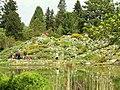Alpine garden, Botanischer Garten München-Nymphenburg - DSC07713.JPG