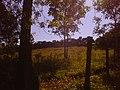 Amanhecer no Campo - panoramio.jpg