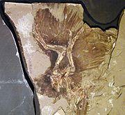 Bird - Wikipedia