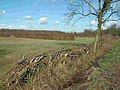 Ancient hedgerow near Monks Wood - geograph.org.uk - 411184.jpg