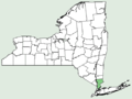 Androsace maxima NY-dist-map.png