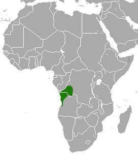 Angolan Talapoin area.png