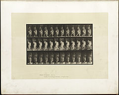 Animal locomotion. Plate 35 (Boston Public Library).jpg