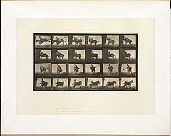 Animal locomotion. Plate 661 (Boston Public Library).jpg