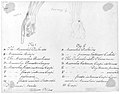 Anotomaical Description of the Hand and the Wrist MET ap45.50 verso.jpg