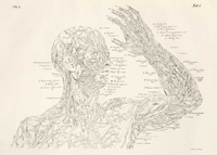 Antommarchi Annotated Anatomical Drawing.png