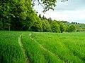 Arable land by Crwys Wood - geograph.org.uk - 1346284.jpg