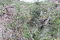 Araguainha - State of Mato Grosso, Brazil - panoramio (309).jpg