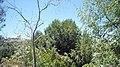 Arbol - panoramio (1).jpg