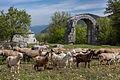 Area archeologica Carsulae, l'arco di Traiano.jpg
