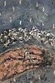 Arezoo Savarpour's Painting 09.jpg
