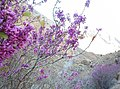Arghavan-valley-Bardaskan.jpg