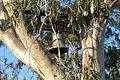 Asinou - Kirche Glocke im Baum 2.jpg