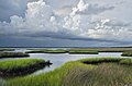 Attractive view of marsh grass and clouds St. Marks NWR 2016-07-03.jpg