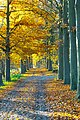 Autumn Avenue (38650632031).jpg