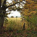 Autumn Perspektiv (247645127).jpeg