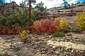 Autumn colours in SW Utah - a short visit to Zion Park on Hwy 9, Utah - (15467338379).jpg
