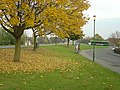 Autumn leaves at Rosedale Drive - geograph.org.uk - 612622.jpg