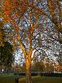 Autumnal Sutton Green, SUTTON, Surrey, Greater London (6).jpg