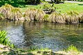 Avon River in Christchurch 10.jpg