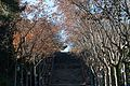 Barcelona - Palast & Garten (Fontäne) Montjuic 015.jpg