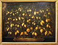 Bartolomeo bimbi, melagoli, cedri e limoni, 1715, 01.JPG