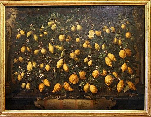 Bartolomeo bimbi, melagoli, cedri e limoni, 1715, 01
