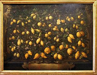 Zitronen Bartolomeo bimbi 1715