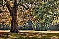 Baum im Herbst - Photoart - Sascha Grosser.jpg