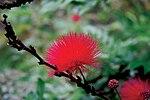 Beautiful Waimea Valley awes visitors with gardens, falls 130428-M-QI063-744.jpg