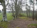 Beechwood on the edge of Kilravock estate - geograph.org.uk - 773513.jpg