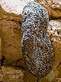 Bees Nest, Ajabgarh Fort (30326616932).jpg