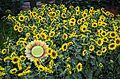 Bellagio Conservatory and Botanical Gardens (9464227730).jpg