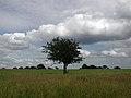 Beverley Westwood - geograph.org.uk - 481198.jpg