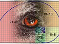 Bidu Fibonacci.jpg