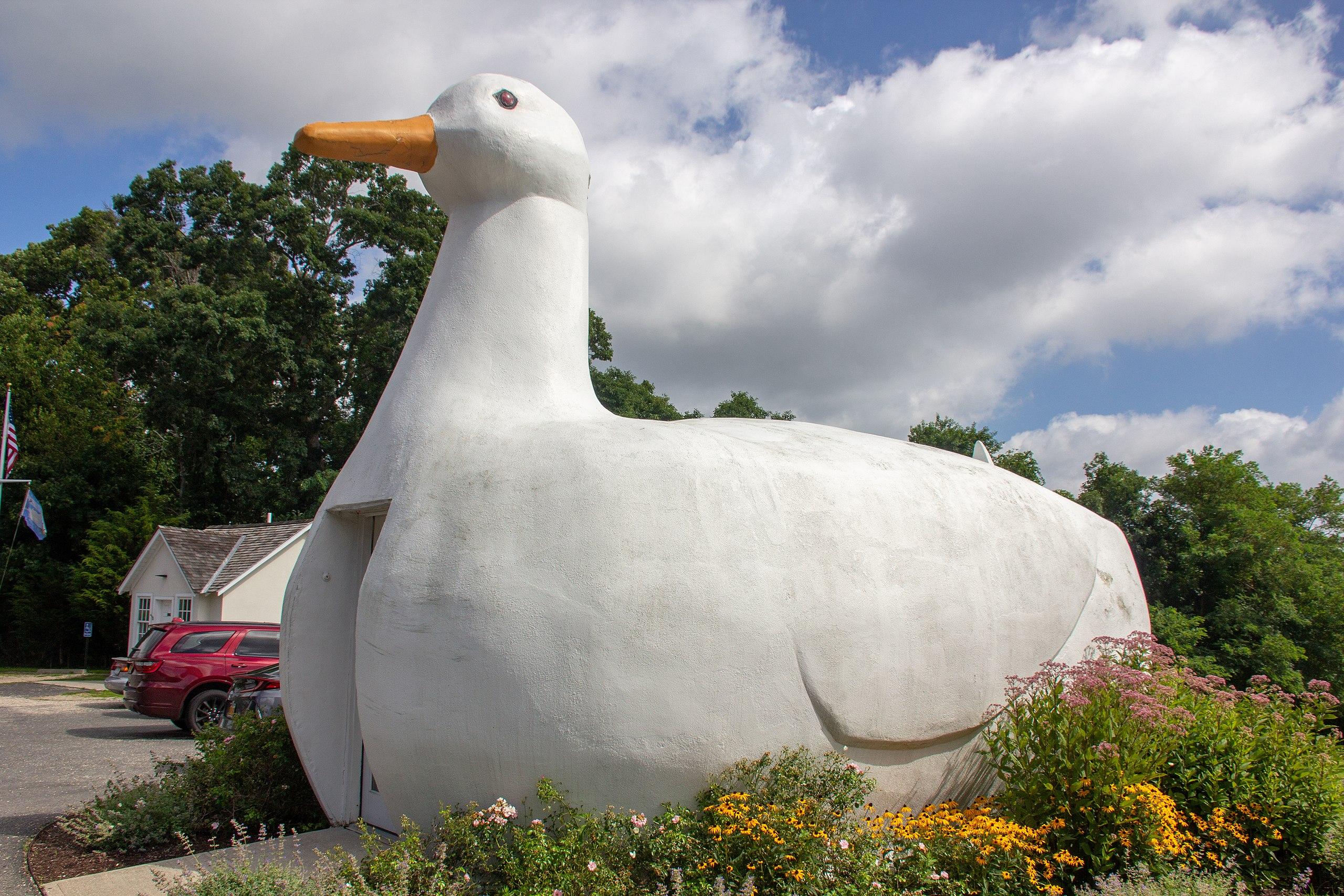 Wikipedia-Big Duck