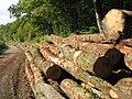 Billes de bois sur le bord d'une route - 001.JPG
