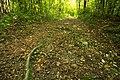 Biotopo inghiaie cammino radice.jpg