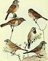 Bird lore (1913) (14746690324).jpg