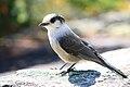 Bird near.jpg