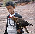 Bird of Prey, Yemen (11621128595).jpg