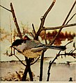 Birds and nature (1905) (14569109477).jpg