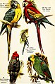 Birds of the world for young people (1909) (14748858425).jpg