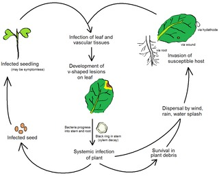 Plant pathology Scientific study of plant diseases
